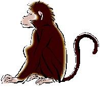 Chinese animal Monkey (shen) 2012