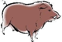 Chinese animal pig (hai) 2012
